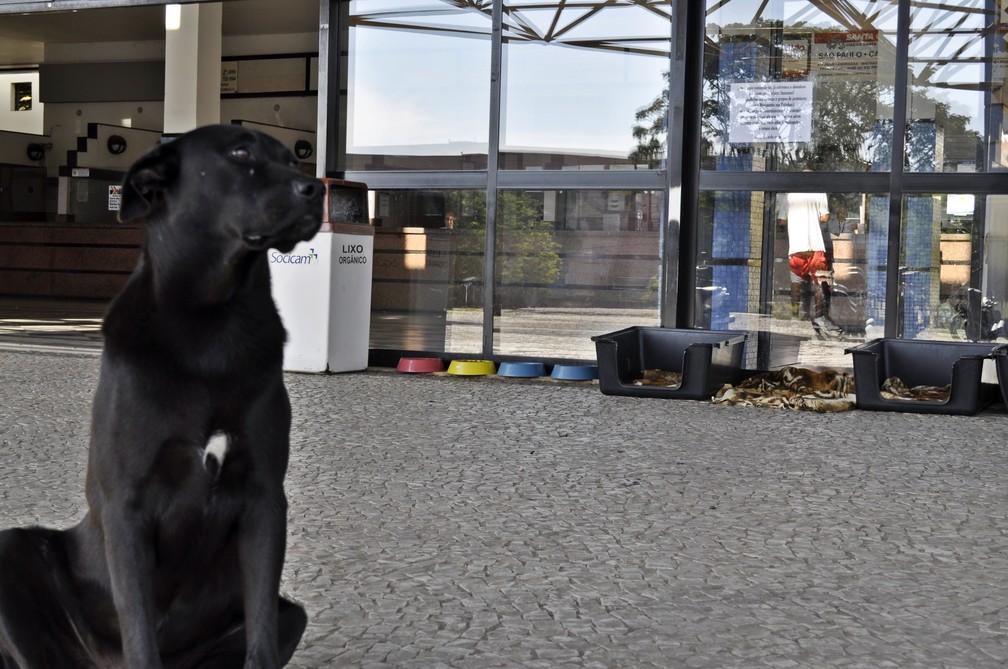 Atualmente, dois cães aguardam por adoção na rodoviária de Poços de Caldas (MG) — Foto: Camilla Resende/G1