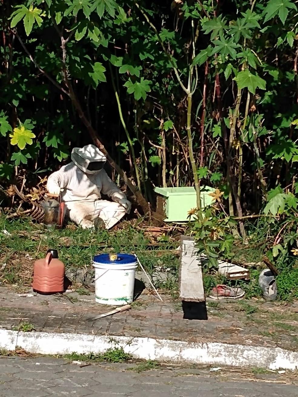 Apicultor foi chamado para retirar abelhas após ataques em Navegantes, SC. — Foto: Corpo de Bombeiros/Divulgação