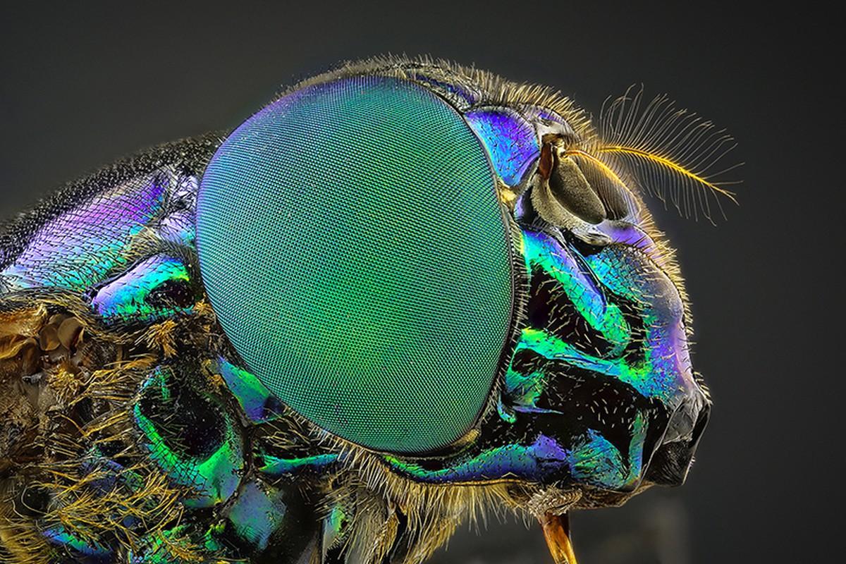 Especialista em macrofotografia registra detalhes de insetos