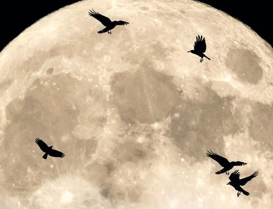 Canto de corvos (Foto: Thinkstock/Getty Images)