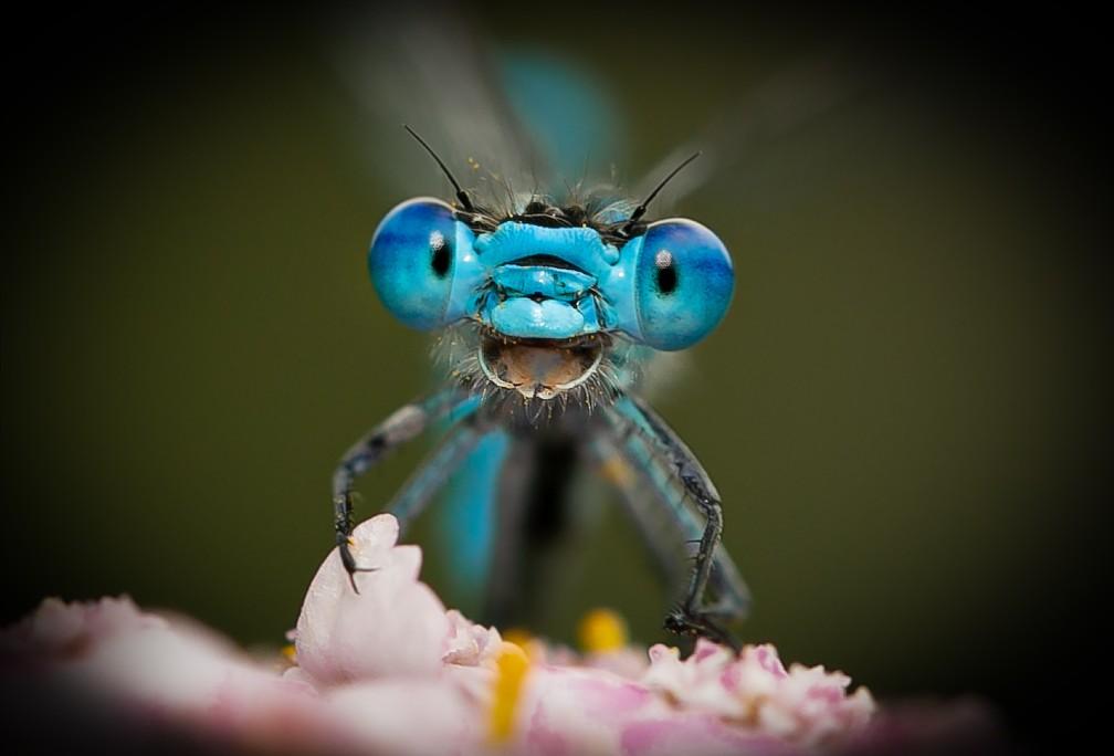 'Não se preocupe. Seja feliz!': libélula que parece estar sorrindo foi fotografada por Axel Bocker em Hemer, na Alemanha. — Foto: © Axel Becker /Comedywildlifephoto.com