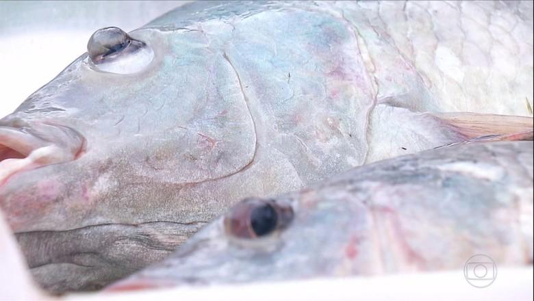 tilapia-peixe-mar (Foto: Reprodução/TV Globo)