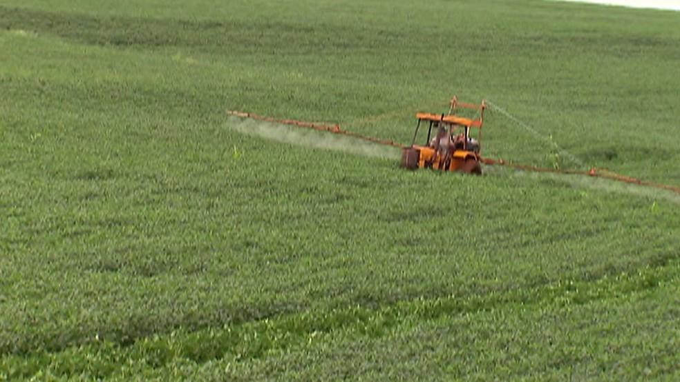 Aumenta quantidade de agrotóxicos liberados pela Anvisa; Mogi tem programa para conscientizar agricultores — Foto: Reprodução/TV Diário