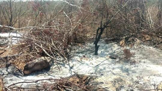 Operação integrada flagra desmatamento em mais de 2 mil hectares de vegetação nativa da caatinga em Alagoas