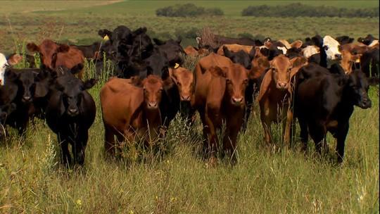 Fazendas de gado no Rio Grande do Sul ajudam a preservar o pampa