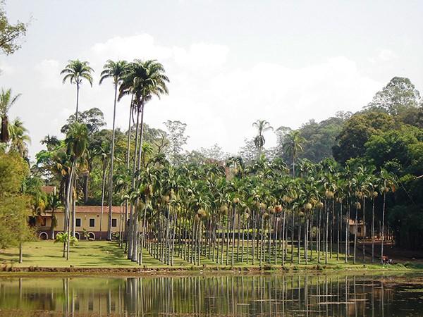 Floresta Edmundo Navarro de Andrade reabre para visitas em Rio Claro aos fins de semana