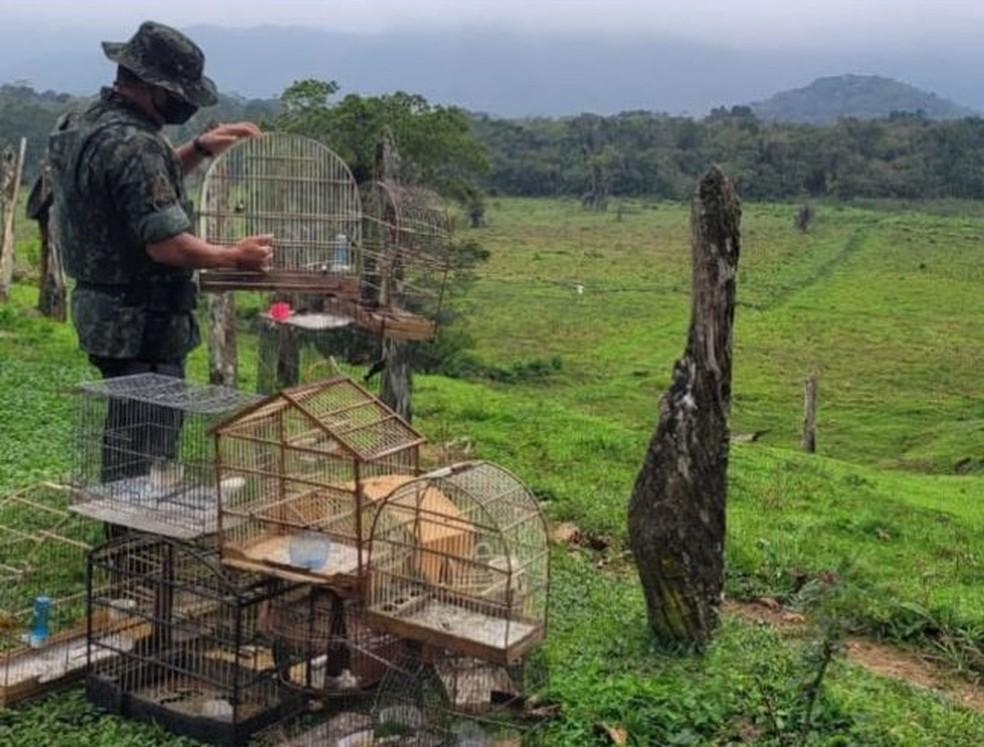 Policial militar ambiental devolve aves silvestres mantidas em cativeiro nesta terça-feira (14) — Foto: Polícia Militar Ambiental