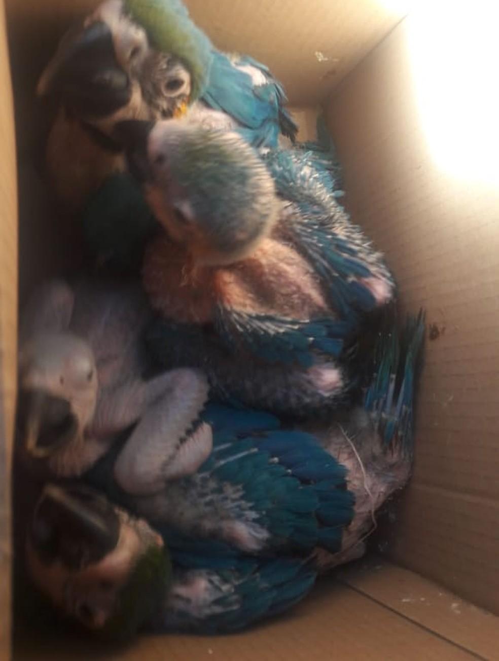 Araras em extinção eram vendidas por traficante de animais em SP — Foto: Polícia Civil/divulgação