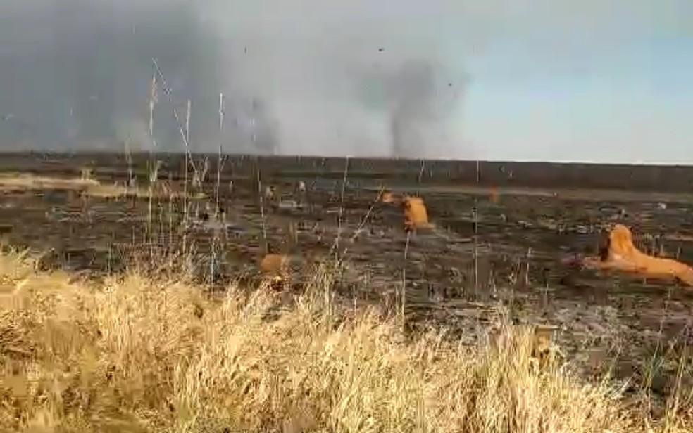 Incêndio de grandes proporções atinge o Parque Nacional das Emas, em Goiás — Foto: Divulgação/Parque Nacional das Emas