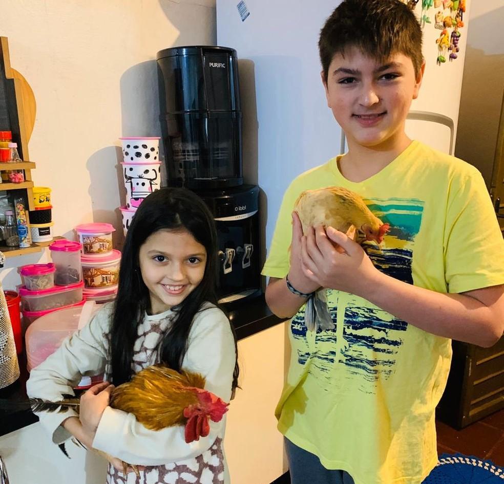Família comprou galo e galinha de estimação para o filho autista, pois animais o ajudam a acalmar, segundo a mãe — Foto: Adriana Carraro Neres/Arquivo pessoal