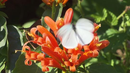 A estação das flores coloriu o 'Meu Paraná'
