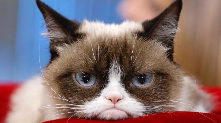 Grumpy Cat (Foto: Reprodução/Instagram)