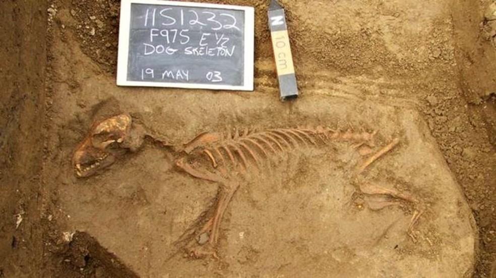 Primeiros cães vieram para as Américas apenas por volta de 10 mil anos atrás, segundo achados arqueológicos (Foto: Illinois State Archaeological Survey)