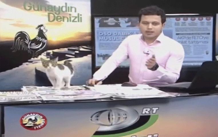 Gatinho de rua 'invade' telejornal ao vivo na Turquia (Foto: Reprodução/Twitter)