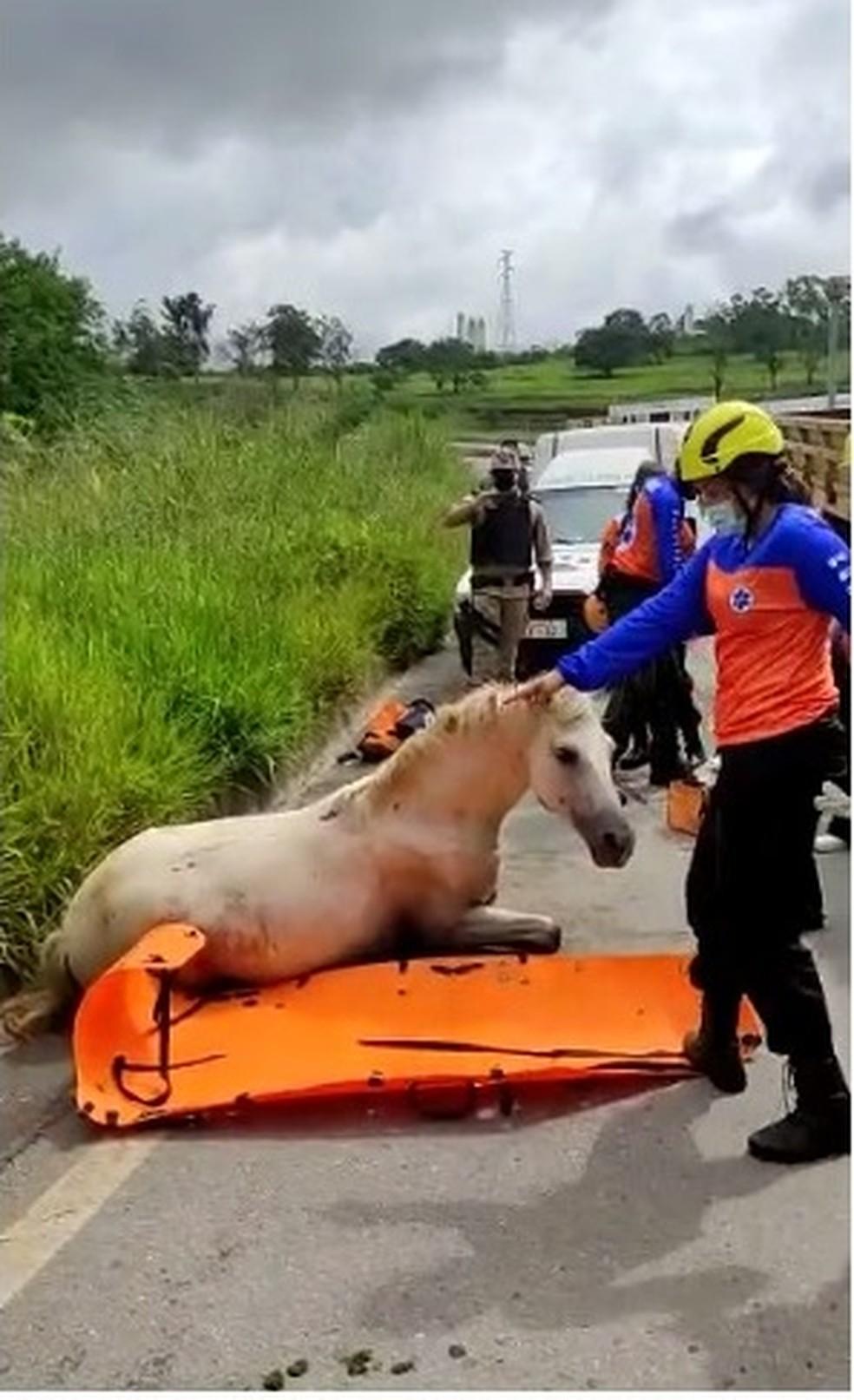 Ação popular cobra cumprimento da lei sobre circulação de veículo de tração animal em BH — Foto: Arquivo pessoal/Daniela Sousa