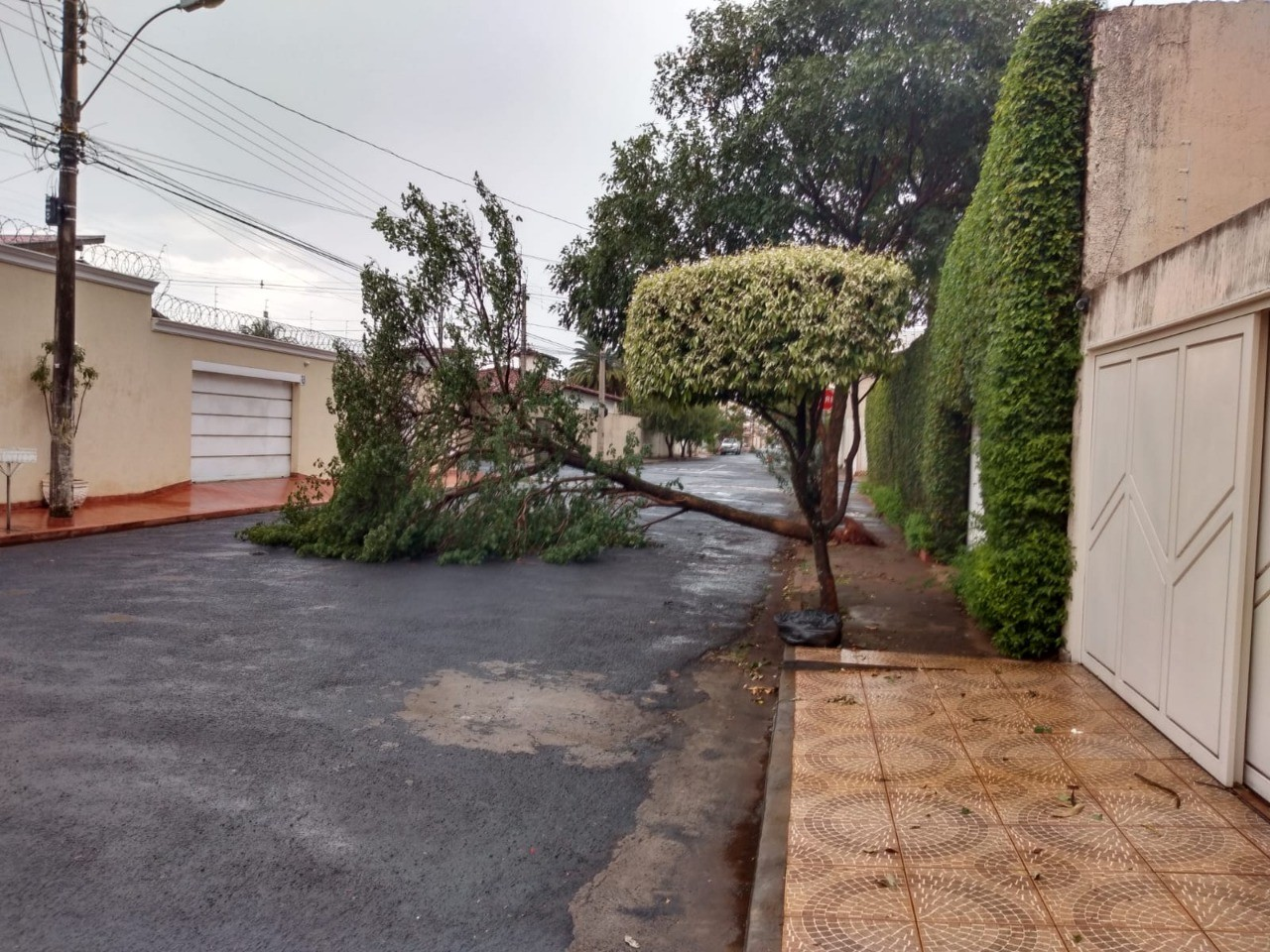 Bombeiros registram queda de árvores após chuva e vento em Uberaba