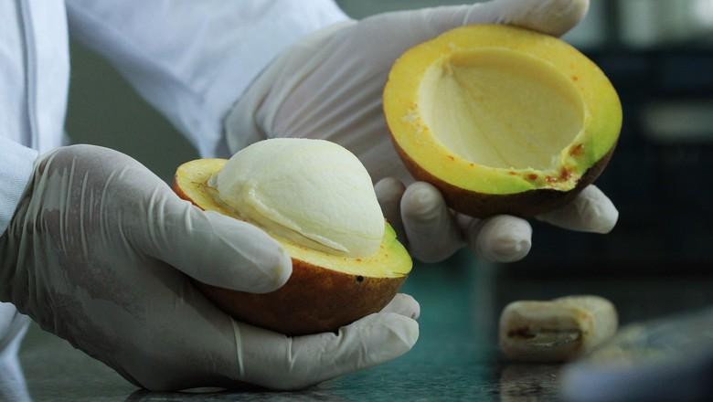 Bacuri pesquisado em laboratório (Foto: Ronaldo Rosa/Divulgação)