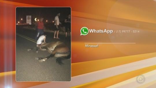 Motorista fica ferida após bater carro em cavalo solto em rodovia de Mirassol