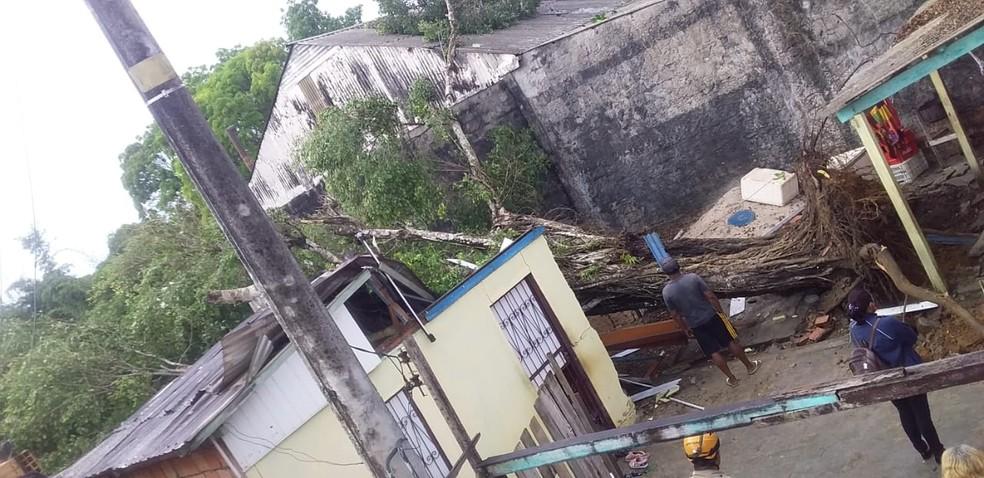 Corpo de Bombeiros atendeu ocorrências de corte de árvores sobre residências. — Foto: Divulgação/Corpo de Bombeiros