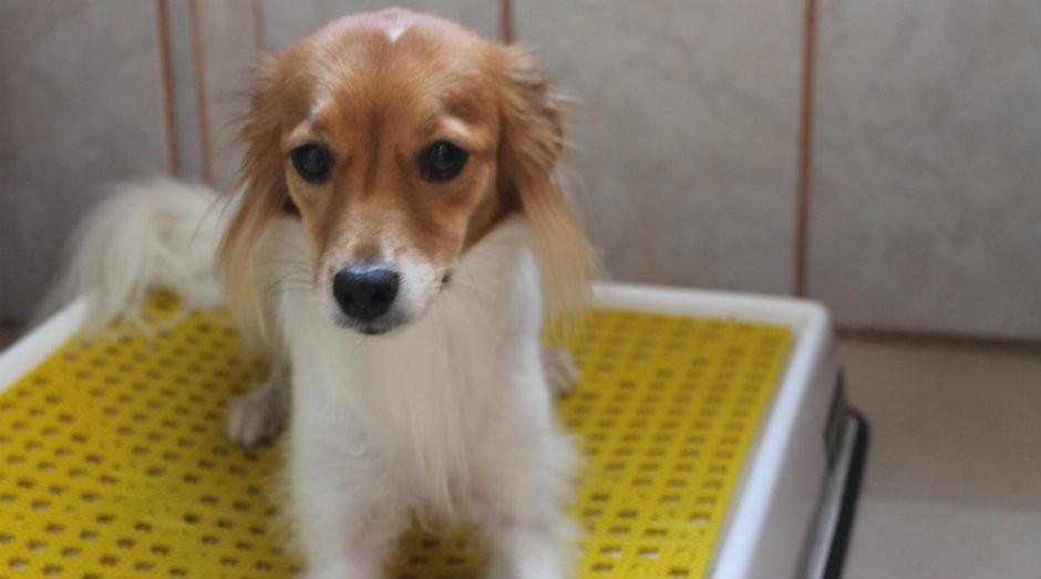 Weasy serve como banheiro inteligente para cachorros (Foto: Divulgação)