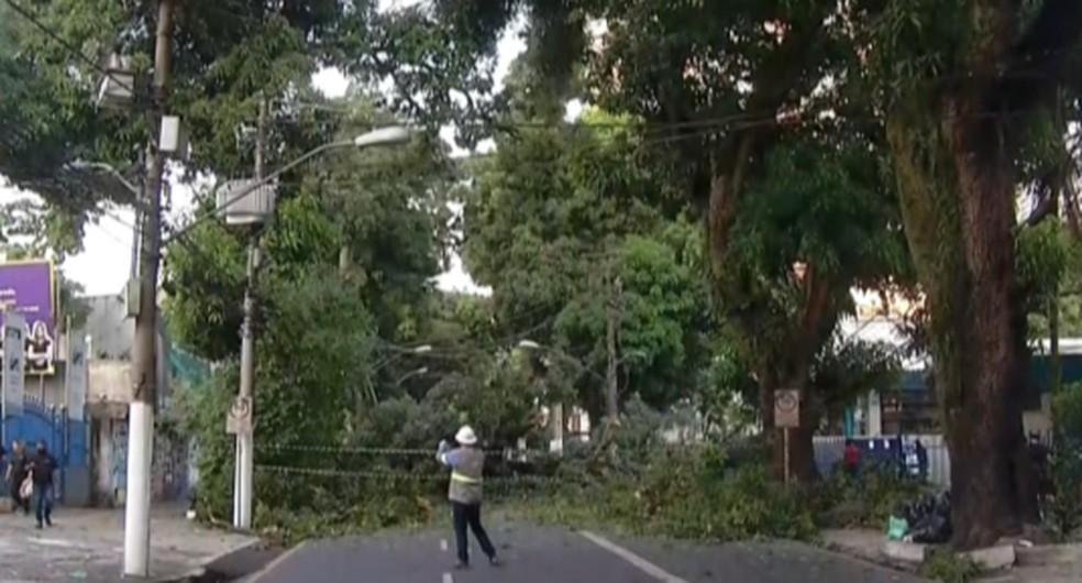 Mangueira cai durante a madrugada desta quarta-feira (15) e bloqueia trânsito na avenida Governador José Malcher, em Belém — Foto: TV Liberal/Reprodução