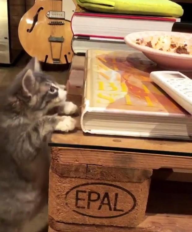 Os gatos de Thaila Ayala brincam entre a decoração da casa (Foto: Instagram/ Reprodução)