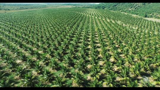 Bahia supera Minas Gerais e se torna 2º maior produtor de frutas do Brasil, aponta pesquisa do IBGE