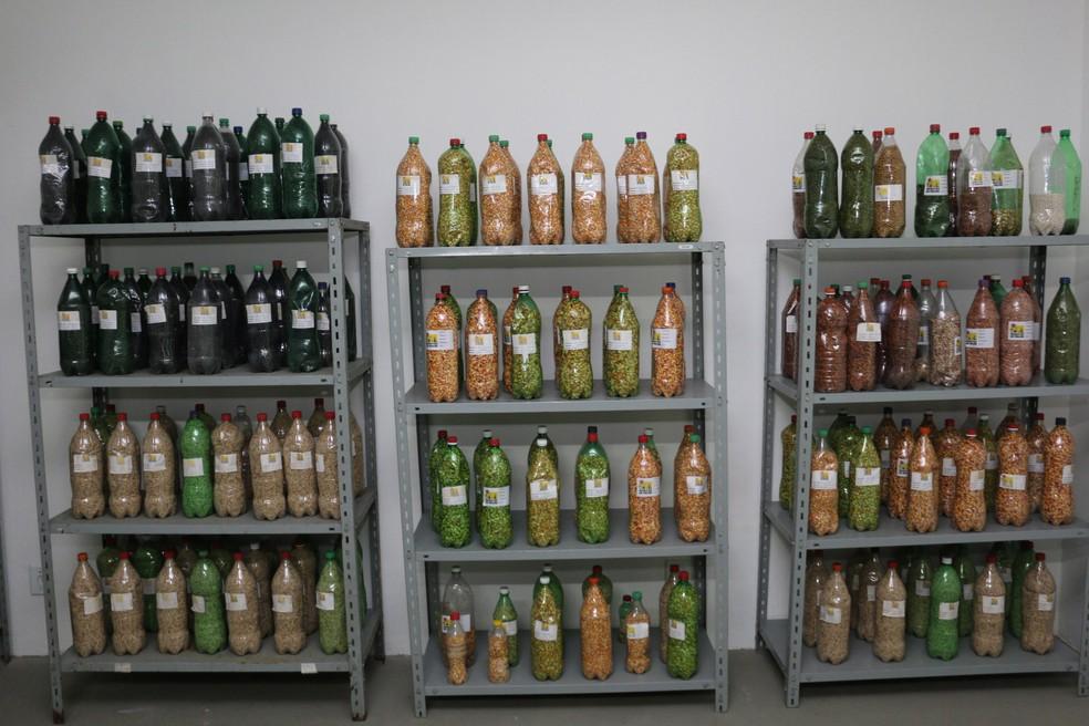 O Banco Mãe de Sementes serve para armazenar as sementes produzidas pelos agricultores, de maneira adequada. (Foto: Francisco Franca / Secom )