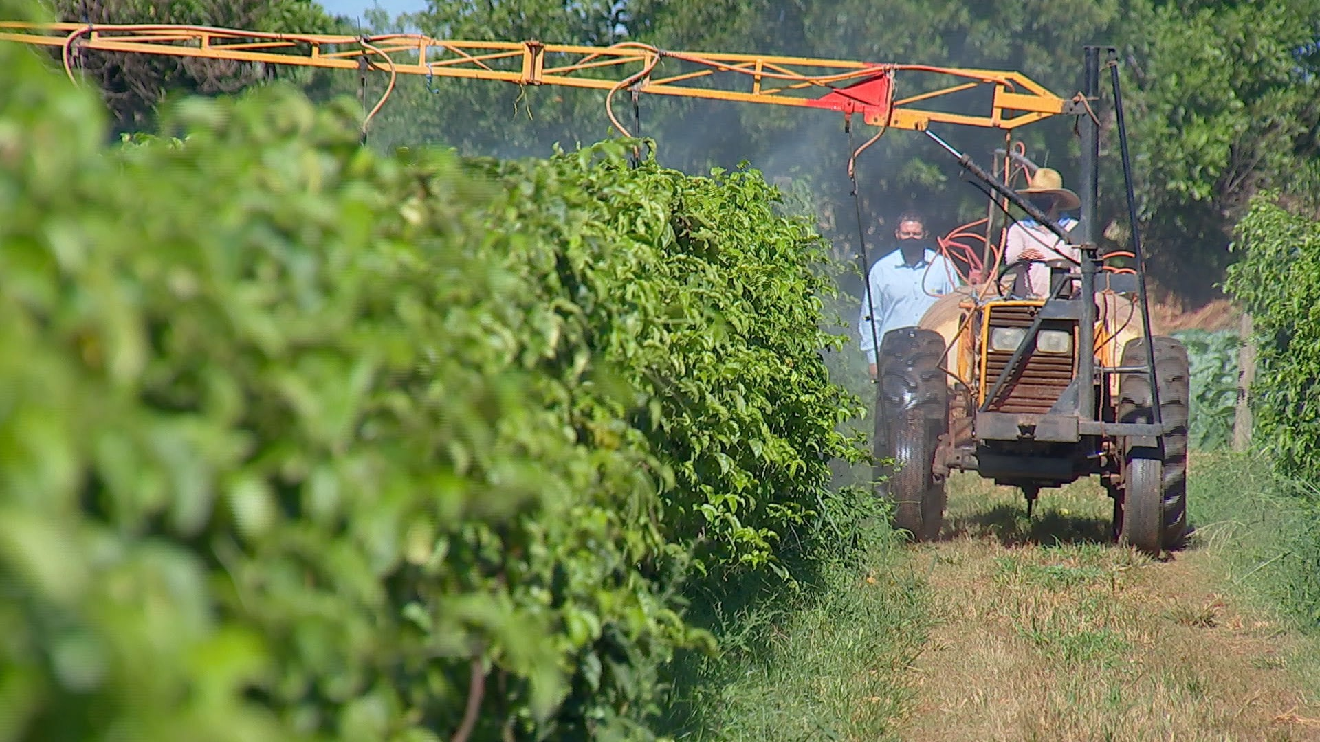 Agricultores investem em bioinsumos para produção de orgânicos