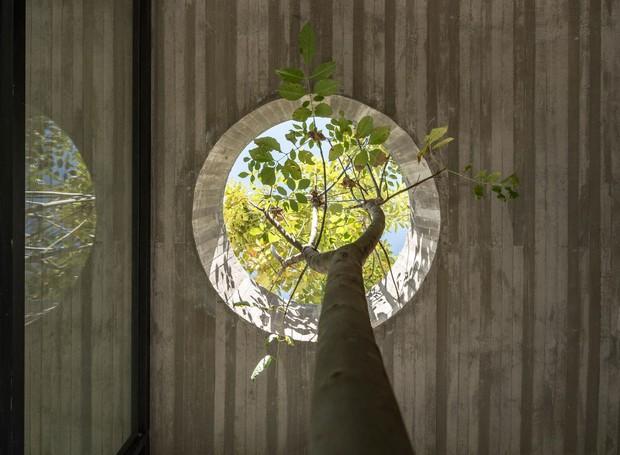 No interior, um buraco no teto dá passagem a uma árvore (Foto: Deezen/ Reprodução)