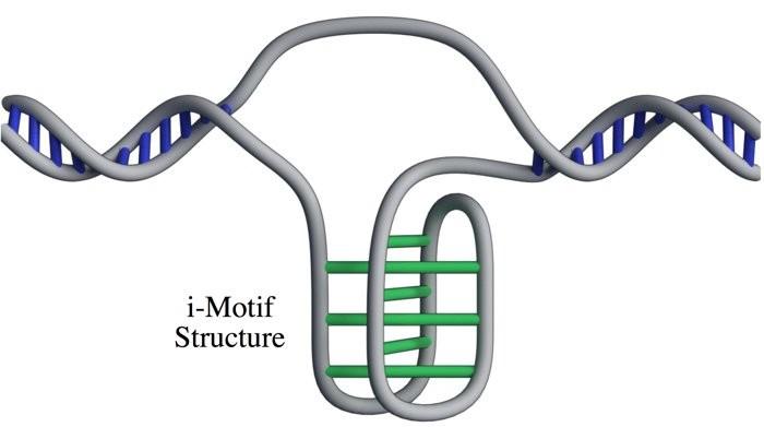 Modelo da estrutura de motivo intercalado (apelidada de i-motif). Ela ganhou esse nome por ter um padrão de nó torcido (Foto: Nature Chemistry/ Reprodução)