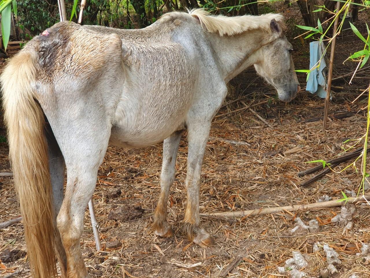 Polícia Ambiental flagra cavalo em situação de maus-tratos e apreende espingardas na zona rural de Agudos