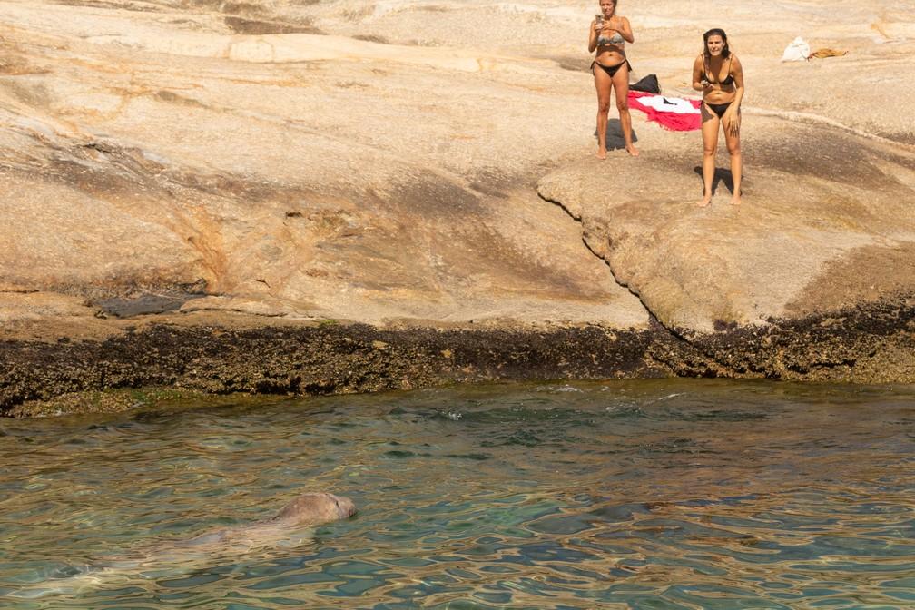 Fotógrafos registram elefante-marinho na Praia do Arpoador — Foto: Helena Barreto/Arquivo pessoal