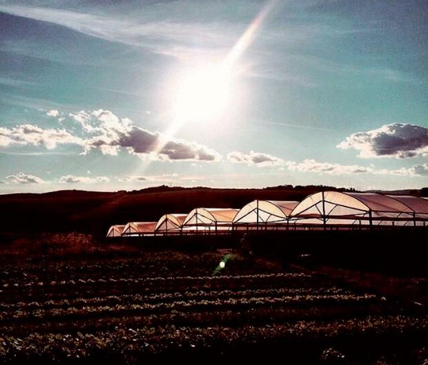 Plantações da Fazenda Santa Adelaide. (Foto: Divulgação)