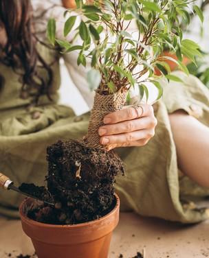 Guia de jardinagem para iniciantes