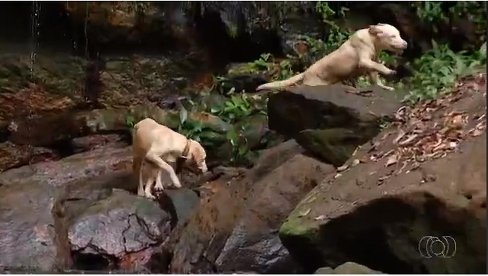Cães conhecem cachoeiras e guiam turistas (Foto: Reprodução/TV Anhanguera)