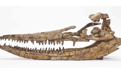 Crânio gigantesco de 'peixe-lagarto' de 200 milhões de anos é encontrado
