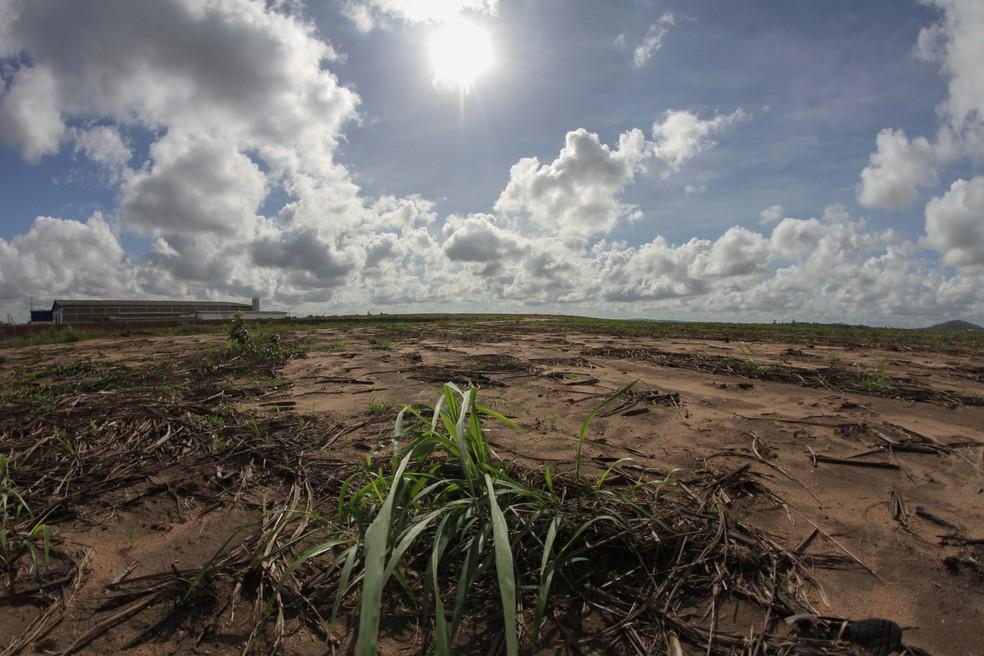 Quase um terço das cidades de Pernambuco é afetado pela estiagem — Foto: Marlon Costa/Pernambuco Press
