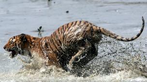 Vida selvagem é alvo crescente do crime organizado (Fot AFP)