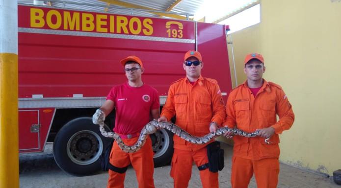 As duas cobras foram devolvidas para a natureza. — Foto: Wandenberg Belém/Sistema Verdes Mares