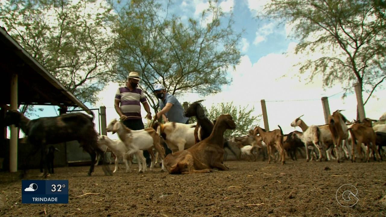 Comunidades de Lagoa Grande se desenvolvem com apoio de técnicos do IPA
