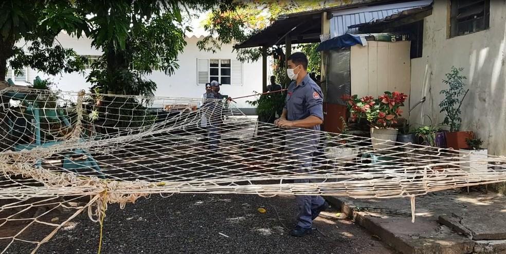 Bombeiros armaram uma rede e devem usar um tranquilizante para resgatar a onça em Marília  — Foto: Alcyr Netto/ TV TEM