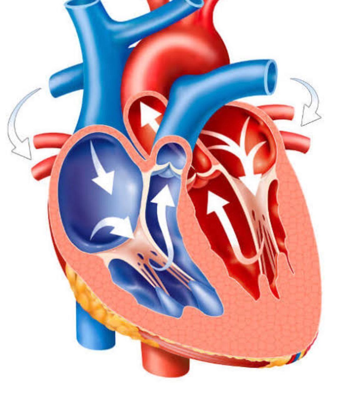A Confederação Nacional de Saúde teme pela proibição de cirurgias eletivas como a de coração