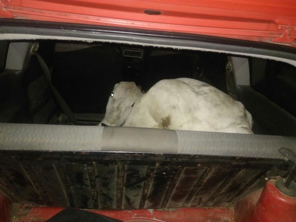 Animal foi furtado de propriedade rural em Tijucas. (Foto: PM/Divulgação)