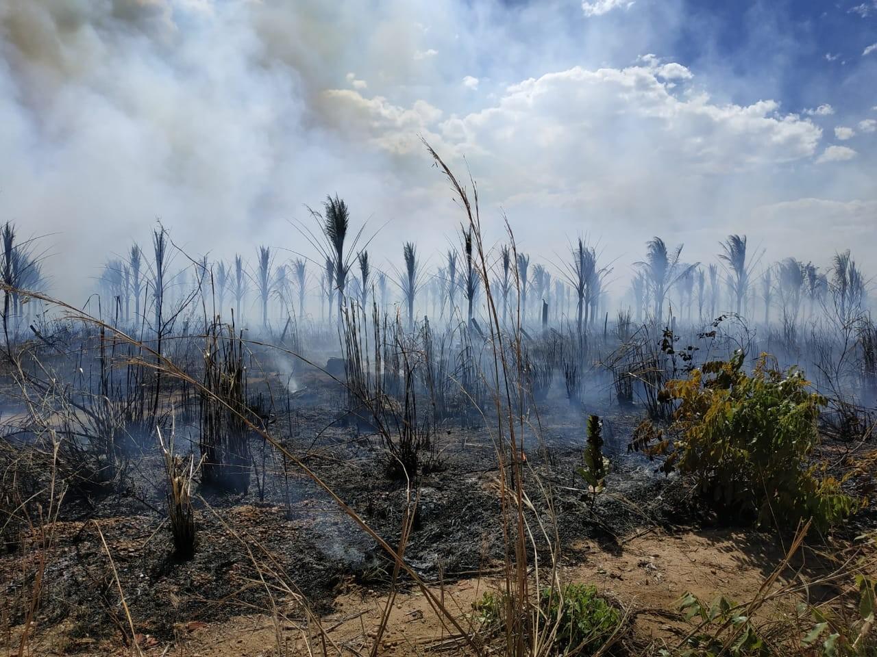 Produtores que tiveram áreas atingidas por incêndios previnem novas queimadas: 'Muita coisa foi destruída'