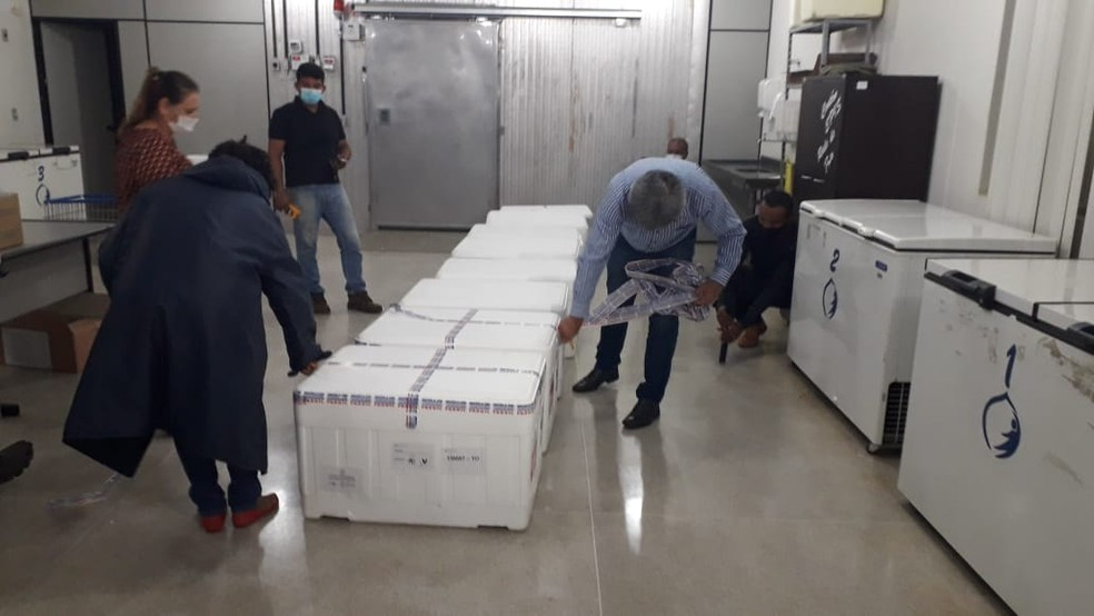 Doses da vacina após chegada no laboratório central do estado — Foto: Edson Reis/G1