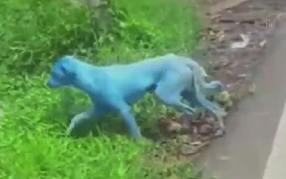 Cão com pelagem azul após contato com resíduos químicos do rio Kasadi, em Mumbai, na Índia (Foto: Reprodução/Ruptly)