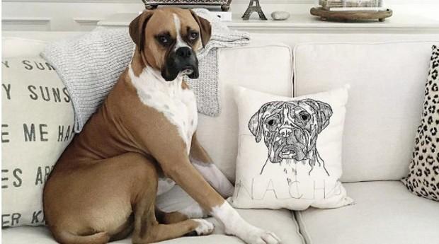 Cãozinho posa ao lado de almofada de Hyla (Foto: Divulgação)