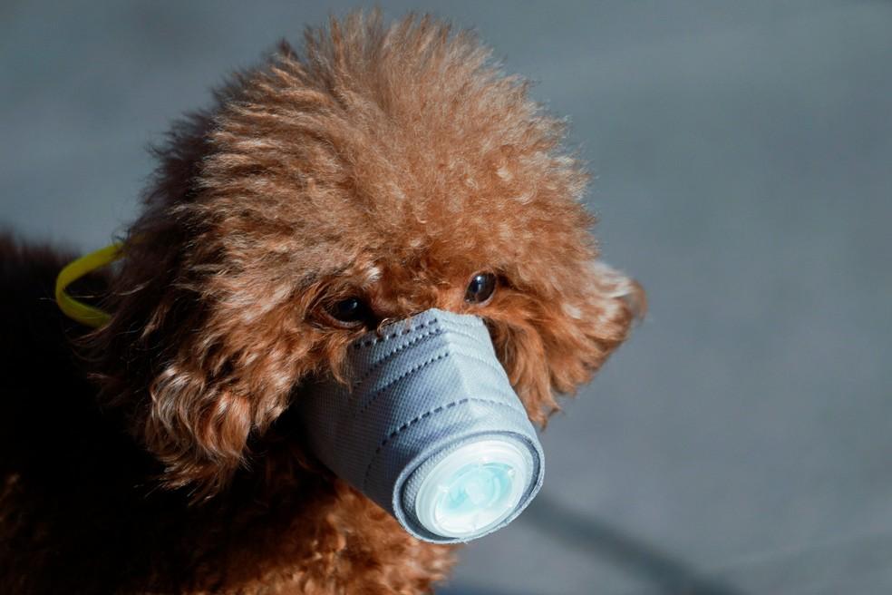 Cão com máscara em área comercial de Shanghai — Foto: Aly Song/Reuters