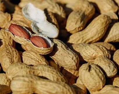Exportação de amendoim in natura brasileiro cresce 12% em meio à pandemia